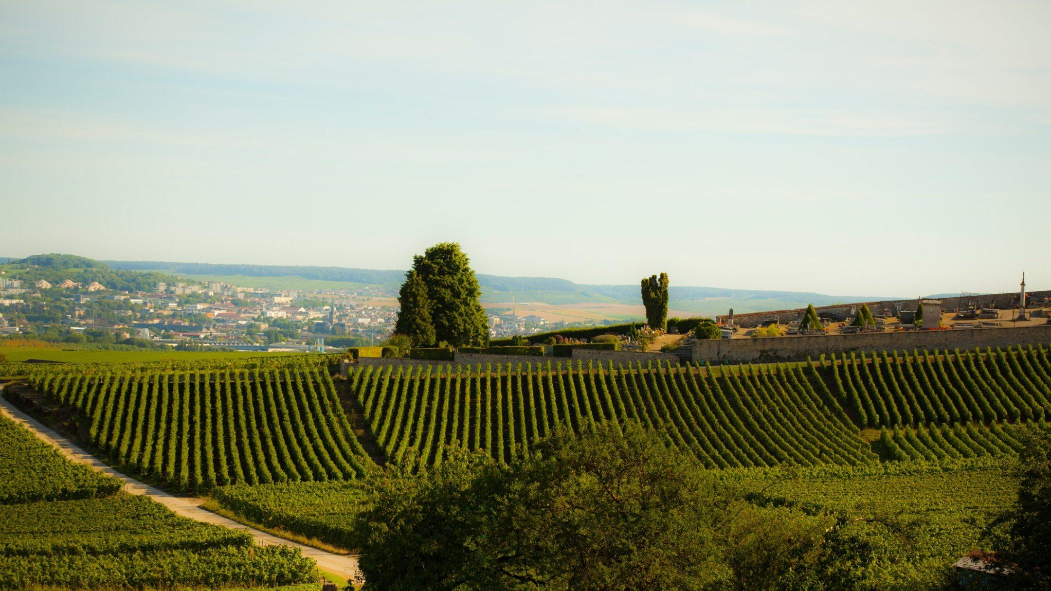 Your first visit to Champagne? Condé Nast Traveller tells you everything you need to know! - Au Beau Sarrazin