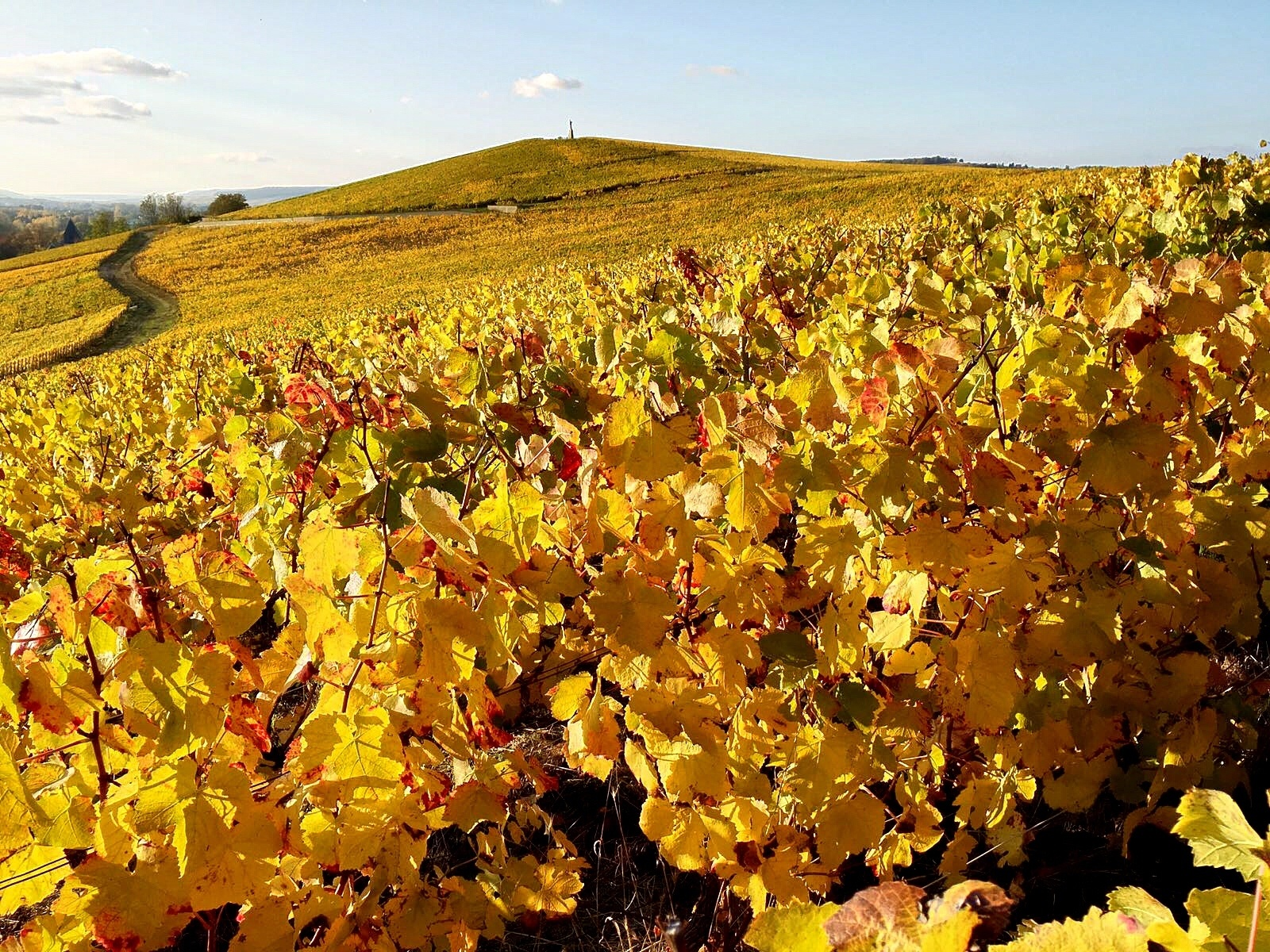 Ten things to do in Champagne, with Yonder - Au Beau Sarrazin